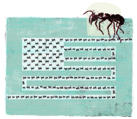 Ants in formation of American flag
