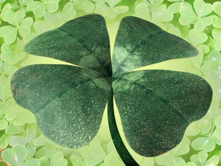 Illustration of four-leaf clover