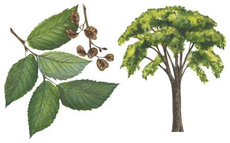 Image result for slippery elm