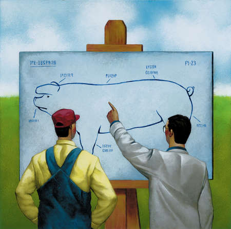 Farmer and scientist looking at diagram of pig