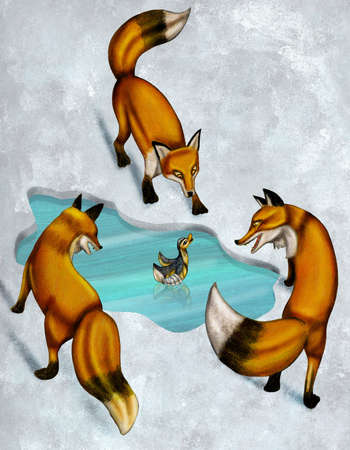 Foxes circling duck
