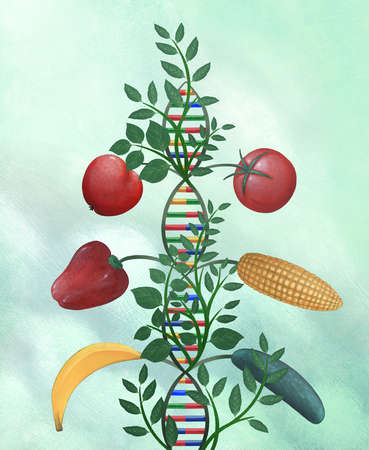 Fruit and vegetables growing from DNA helix