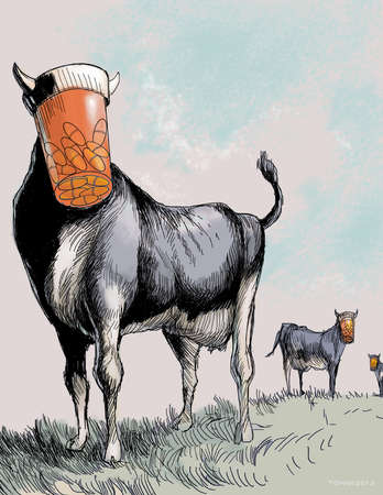 Herd of cattle with prescription bottles for heads