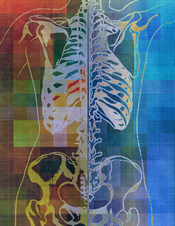 Anatomical drawing of a human skeleton with multicolored background.