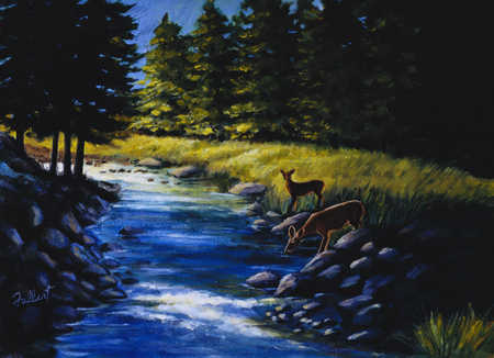 Deer's by stream in forest