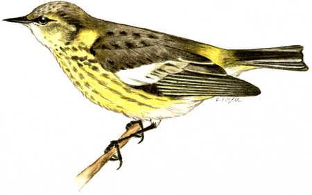 Bird On Small Branch