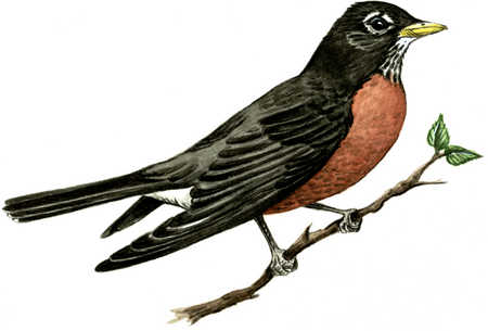 Bird Facing Right