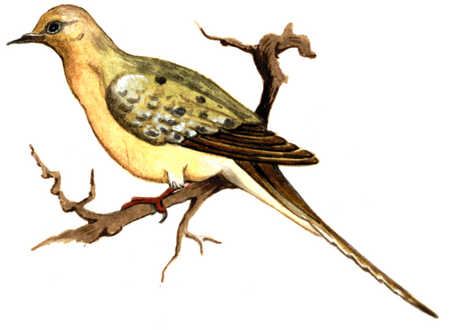 Bird On Larger Branch