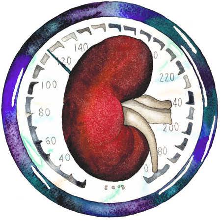 Kidney On Gauge