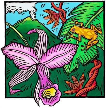 Tropical Jungle Scene