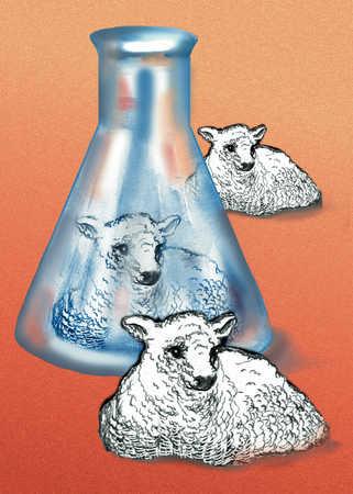 Cloning sheep