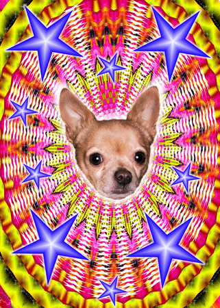 Psychedelic Chihuahua