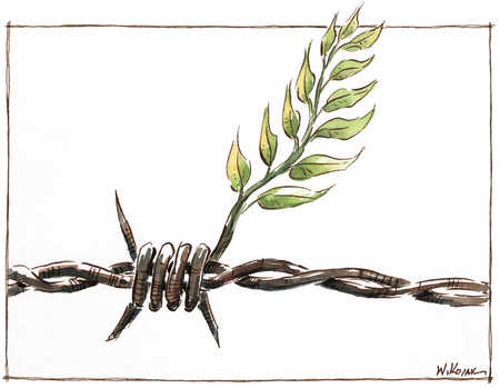 Olive Branch In Barbed Wire
