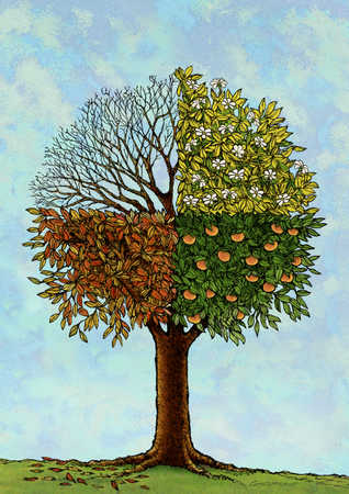 Tree showing four seasons