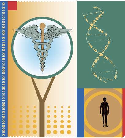caduceus and human body