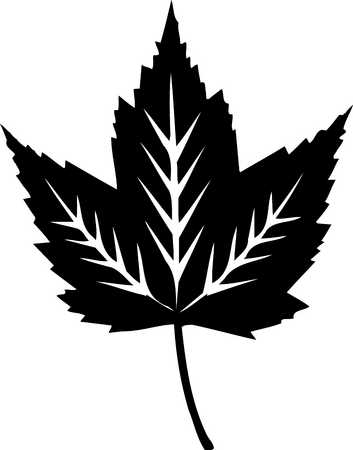 maple leaf with white detail, black and white