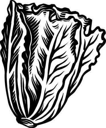 romaine lettuce black and white