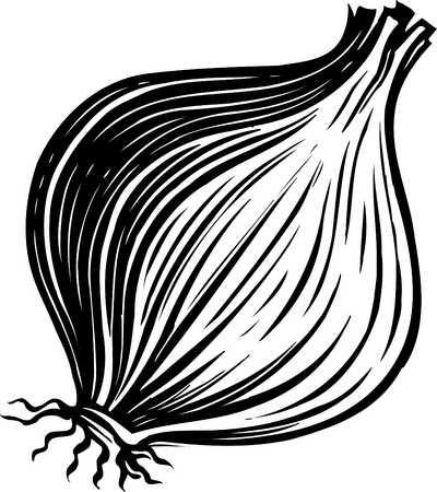 Stock Illustration - onion