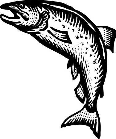 salmon black and white