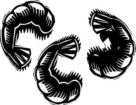 three shrimp black and white