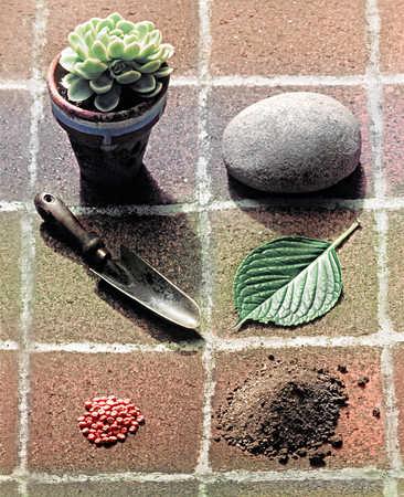 Pot plant, leaf, garden trowel, bean seeds and soil