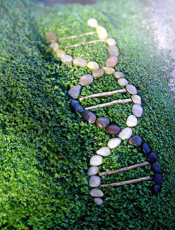 Round stones and wood in DNA double helix