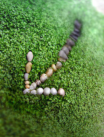 Quartz and basalt stones on ground vegetation