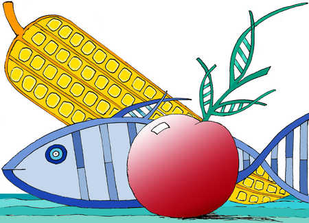 Genetically modified fish, corn, and tomato