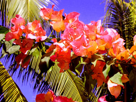Close up of tropical flowers