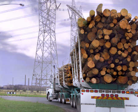 Trucks carrying logs on road near electric pylons