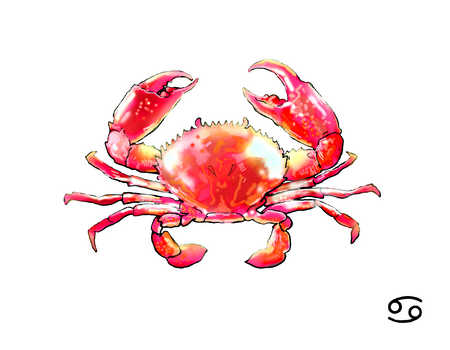 Illustration of Cancer crab