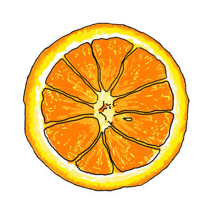 Close up illustration of orange