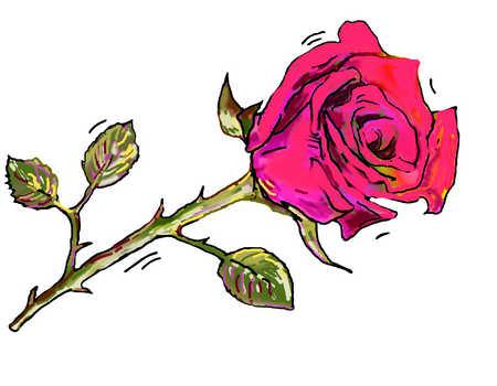 Illustration of red rose