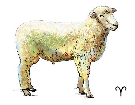Illustration of Aries ram