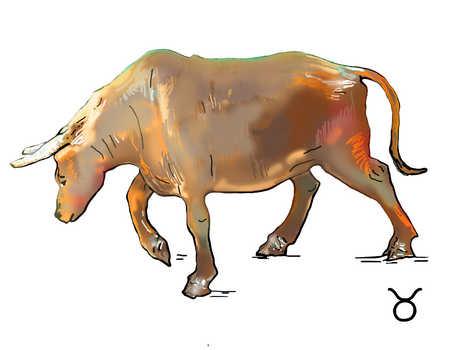 Illustration of Taurus bull