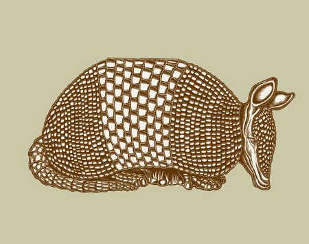 Illustration of armadillo