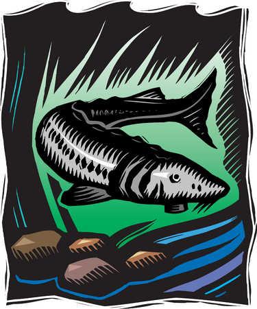 Illustration of catfish swimming