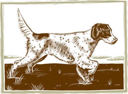 Illustration of hunting dog