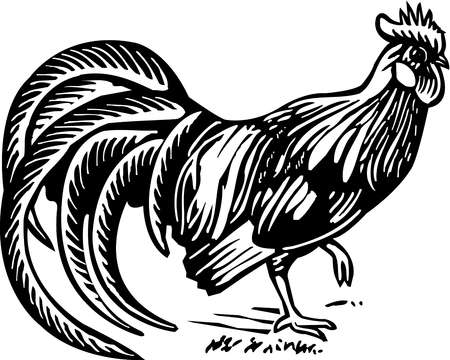 A black and white illustration of a rooster