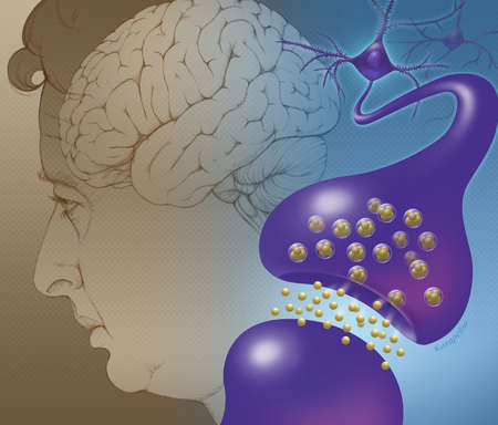 Illustration of elderly brain cell activity. Shown (foreground) is the activity at the synaptic connection between two brain cells (neurons), with neurotransmitter substances being released into the gap between the cells. An elderly person with the brain visible is also shown (background).