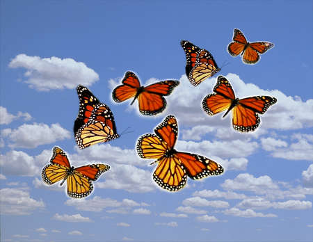 Photo illustration of monarch butterflies in the sky, portraying the concept of hope and freedom. In testimony to their amazing persistence and perseverance, monarch butterflies migrate thousands of miles every year.