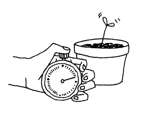 Hand holding stopwatch near growing plant