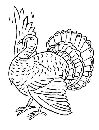 Illustration of turkey raising wing