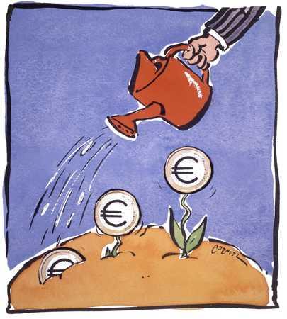 Growing Euro Plants