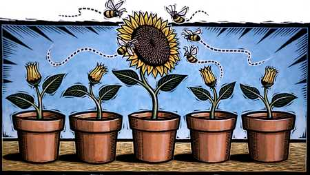 Sunflowers In Pots