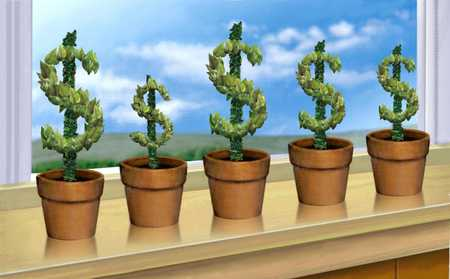 Dollar signs growing In planters