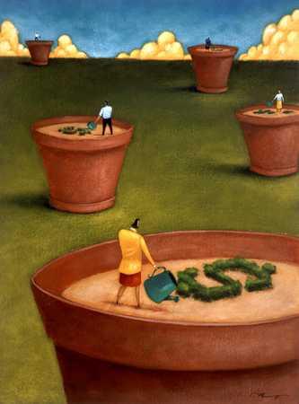 Watering Dollar Shrubs In Flowerpots