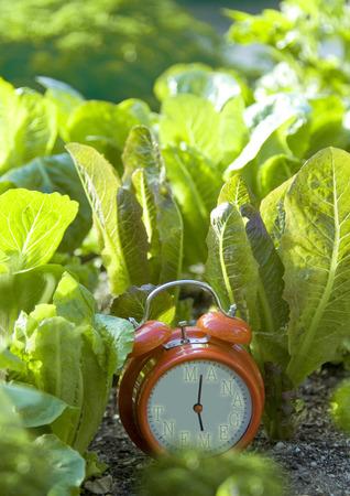 Management clock growing in garden