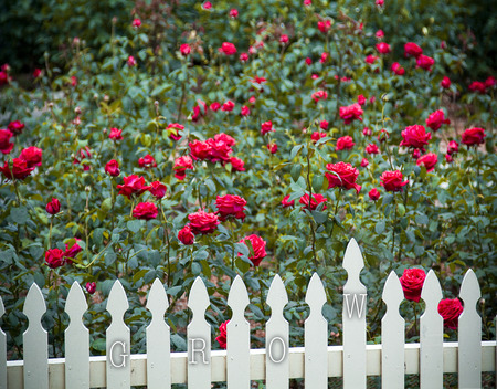 White picket fence with grow text