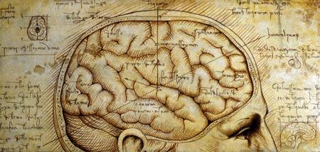 Anatomical illustration of human brain